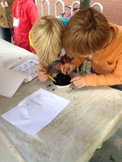 Students use fingers or a pencil to gently explore the contents of their tray of worm compost